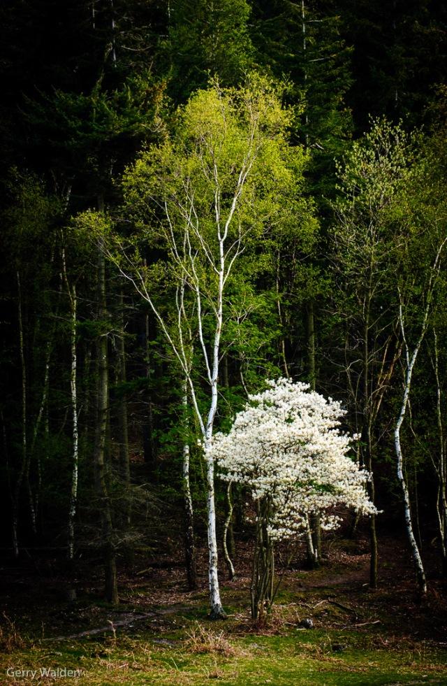Blossom & Trees