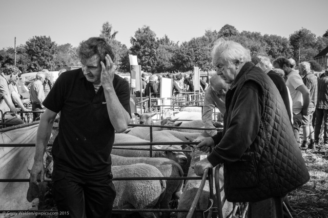 Wilton Sheep Fair #5